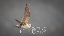 PROFOCUS-209.jpg
