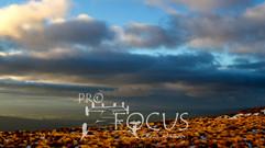 PROFOCUS-81.jpg