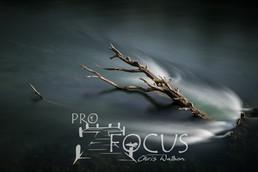 PROFOCUS-442.jpg