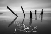 PROFOCUS-478.jpg