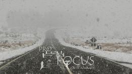 PROFOCUS-306.jpg
