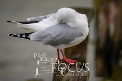 PROFOCUS-450.jpg