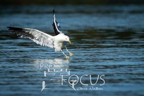 PROFOCUS-499.jpg