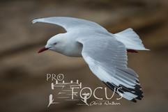 PROFOCUS-398.jpg