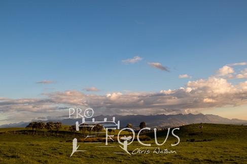 PROFOCUS-384.jpg