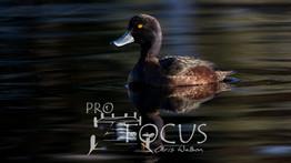 PROFOCUS-206.jpg