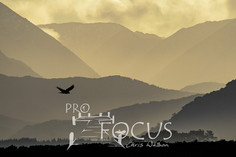 PROFOCUS-313.jpg