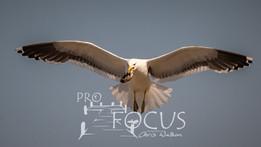 PROFOCUS-496.jpg