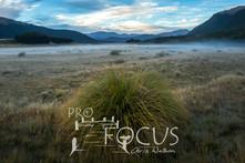 PROFOCUS-423.jpg