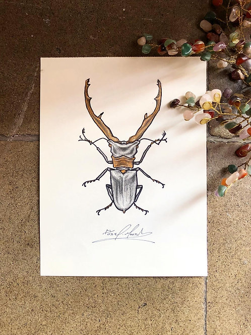 STAG 01