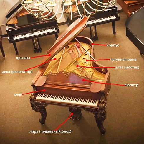 Рояль: устройство, конструкция, детали (фото)