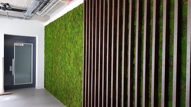 quiet moss soundproof wall installation