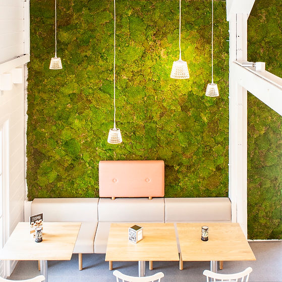 acoustic moss wall installation UK