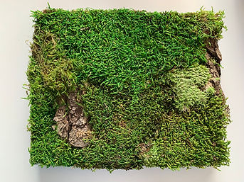 Moss Wall feature installation