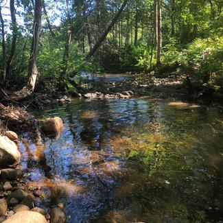 ruisseau en été