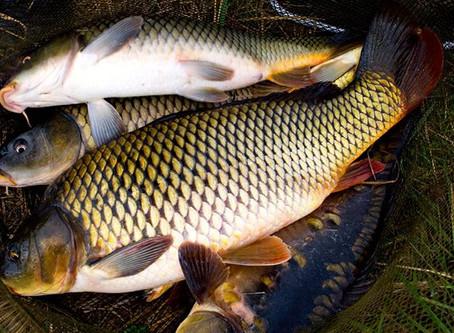 А рыба где зимует? - законодательный абсурд