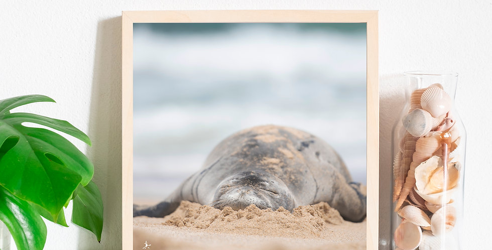 "Monk Seal ""Melting Marshmallow""Photography Prints"