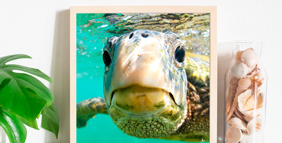 "Sea Turtle ""Hollywood"" Photography Prints"