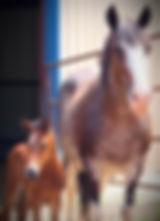 wcem210h_edited.jpg