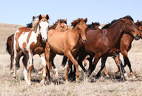 IMG_6496-yearlings_edited.jpg