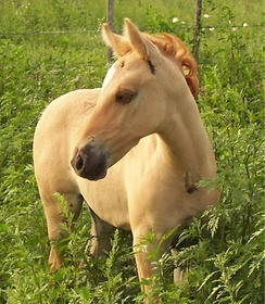 Angel%20filly1_edited.png
