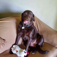 dog-with-toy.jpg