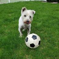 dog-playing-with-ball.jpg