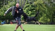 dog_trainging_cutting_edge_k9_1.jpg