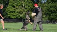 dog_trainging_cutting_edge_k9_145.jpg