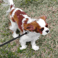 dog-on-leash.jpg