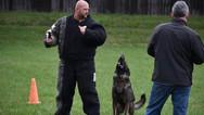 dog_trainging_cutting_edge_k9_16.jpg