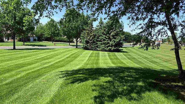 maintainance-lawn-care.jpg