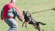 dog_trainging_cutting_edge_k9_2865.jpg