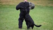 dog_trainging_cutting_edge_k9_13.jpg