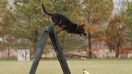 dog_trainging_cutting_edge_k9_22.jpg