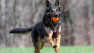 dog_trainging_cutting_edge_k9_2.jpg