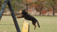 dog_trainging_cutting_edge_k9_23.jpg
