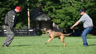 dog_trainging_cutting_edge_k9_134.jpg