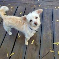 dog-on-deck.jpg