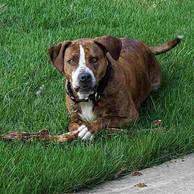 dog-in-grass-laying.jpg