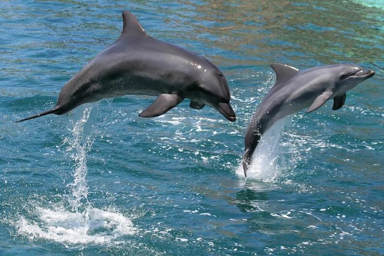 Dolphin-Tours-Texas.jpg