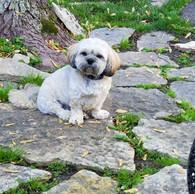 dog-posing.jpg