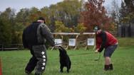 dog_trainging_cutting_edge_k9_17.jpg