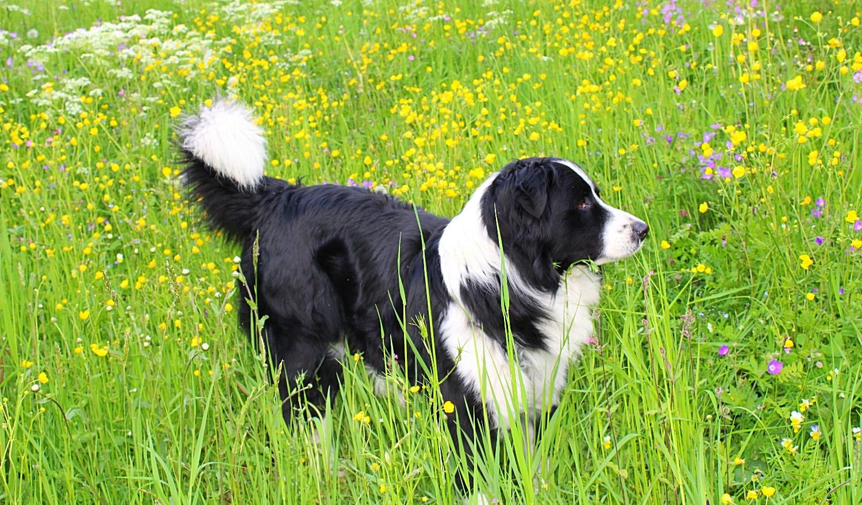 Hund Hof Neuhaus