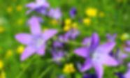 IMG_0805_edited.jpg