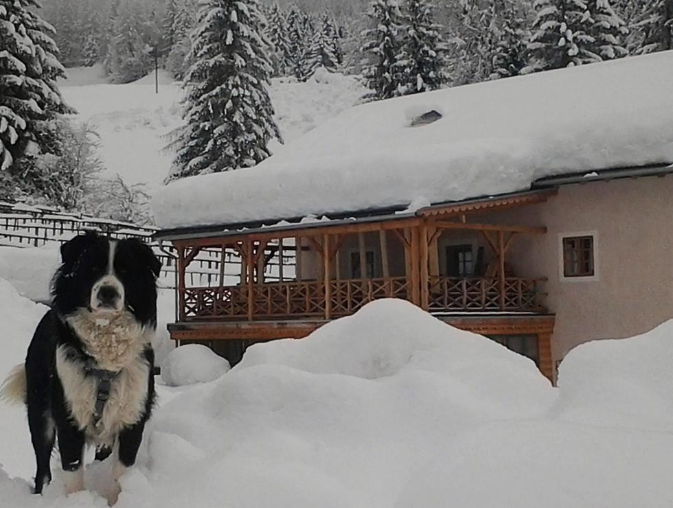 Hund Hof Neuhaus Winter