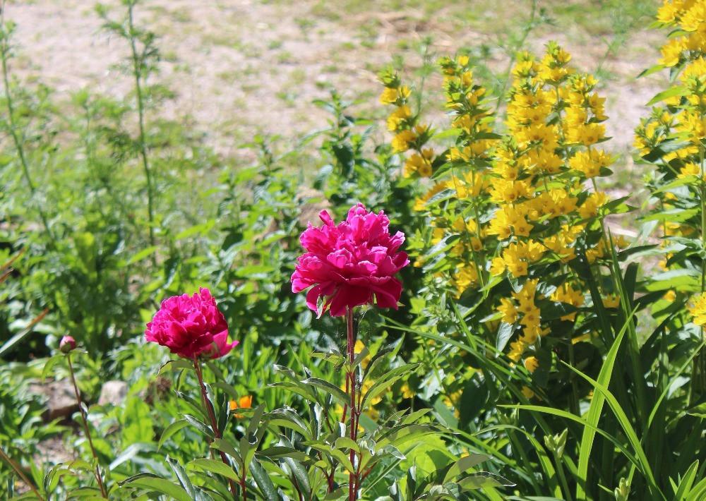 Blumen Hof Neuhaus