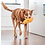 Thumbnail: Red Dingo Durables 狗玩具 Wombat
