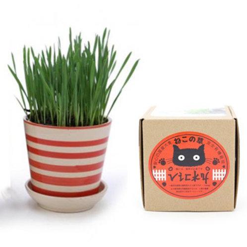 VICKY 有機貓草種植套裝