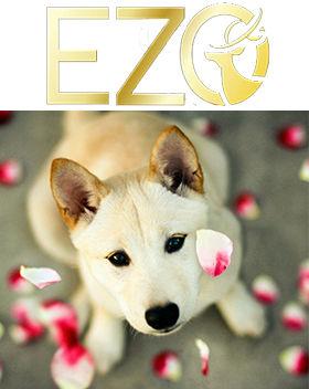 EZO.jpg